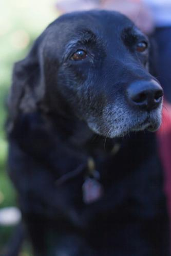Special care provided for older dogs in a quiet, relaxed environment.